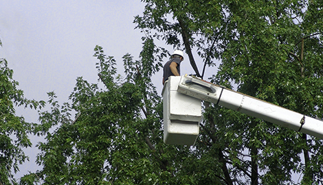 Skye Tree Service | Denver, NC | (704) 497-2591